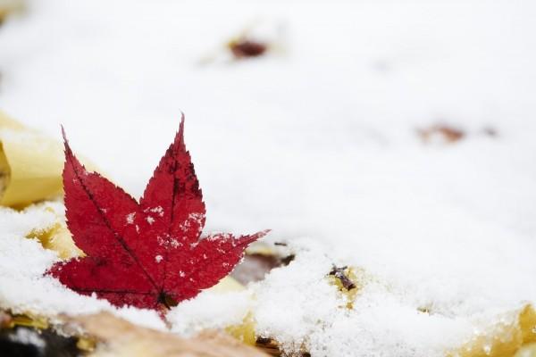 アディダスのメンズ・ジャージ、秋冬のおすすめコーデは?